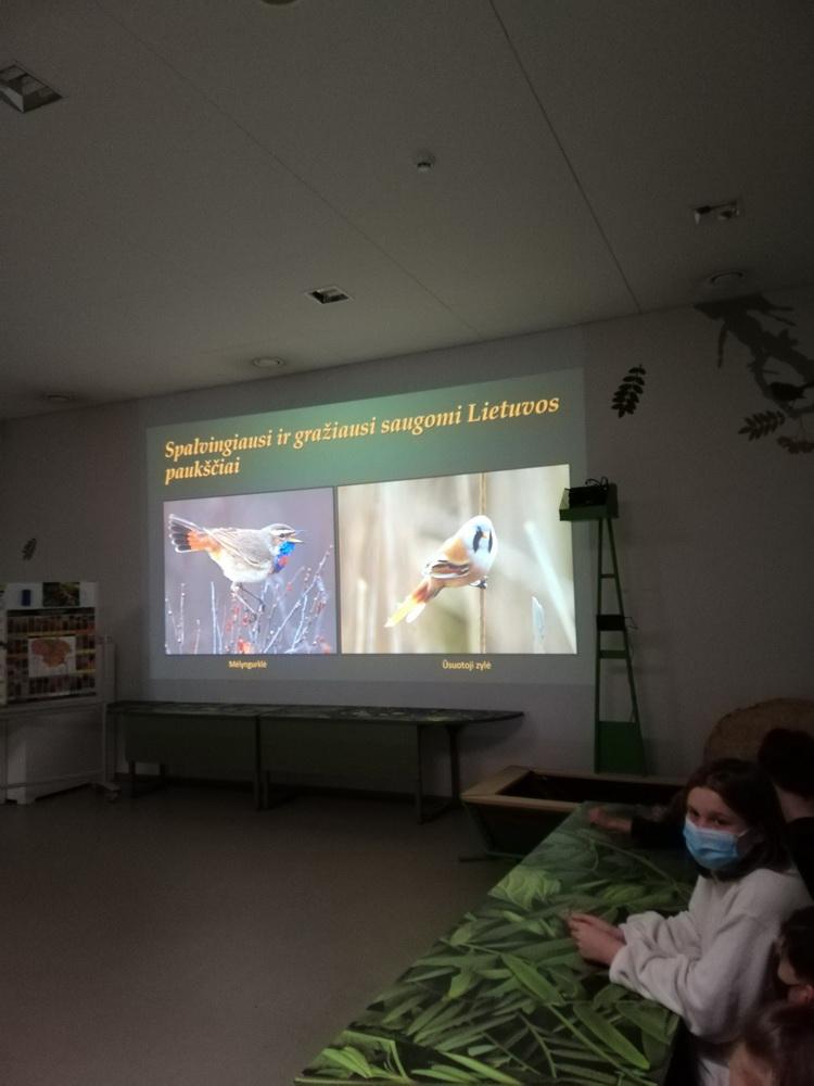 Ar gerai pažįsti Lietuvos paukščius?
